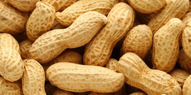 Manfaat Kacang Untuk Kesehatan