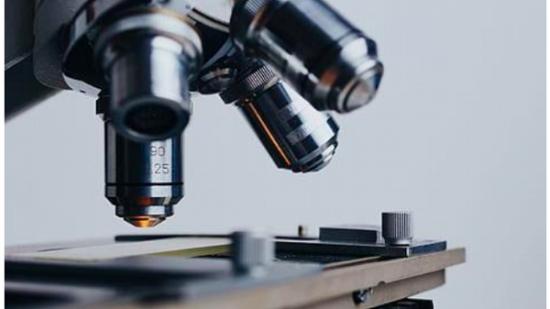 Kenali Apa Saja Cabang Cabang Ilmu Biologi